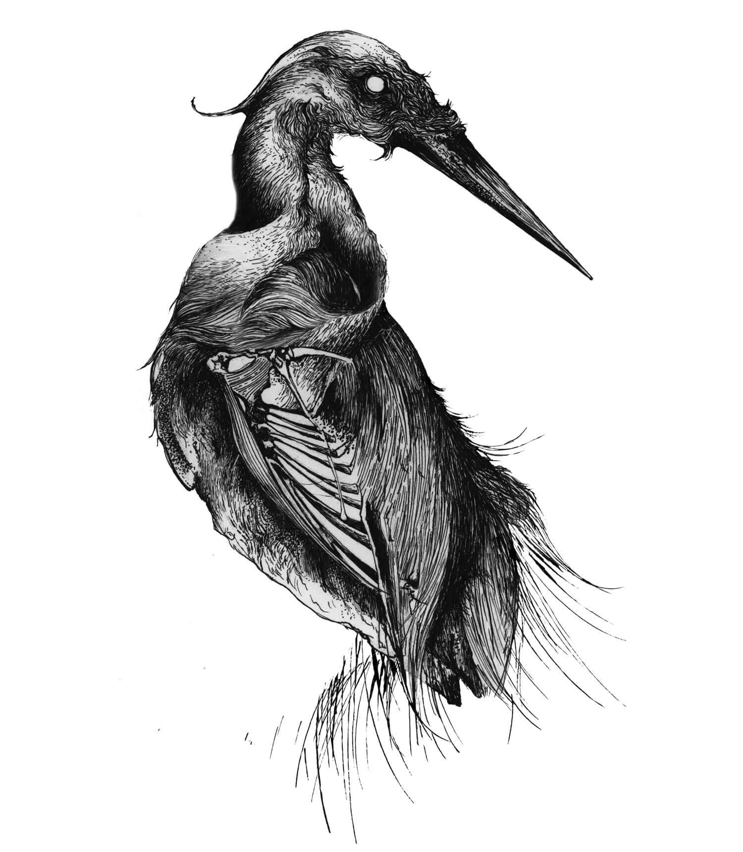 olga_mulica_bird_skeleton