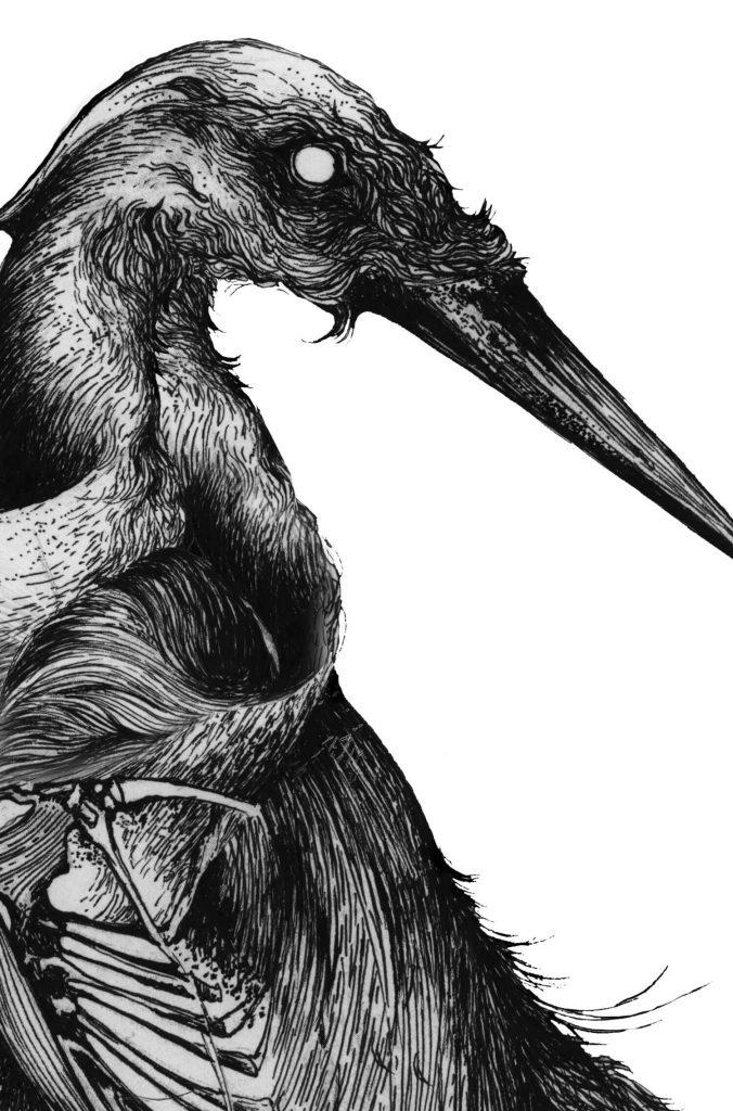 olga_mulica_bird_skeleton_02