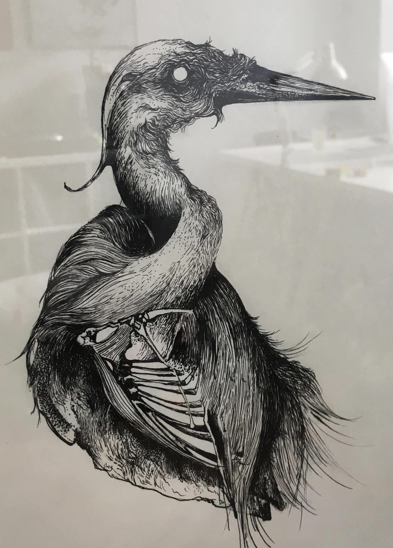 olga_mulica_bird_skull