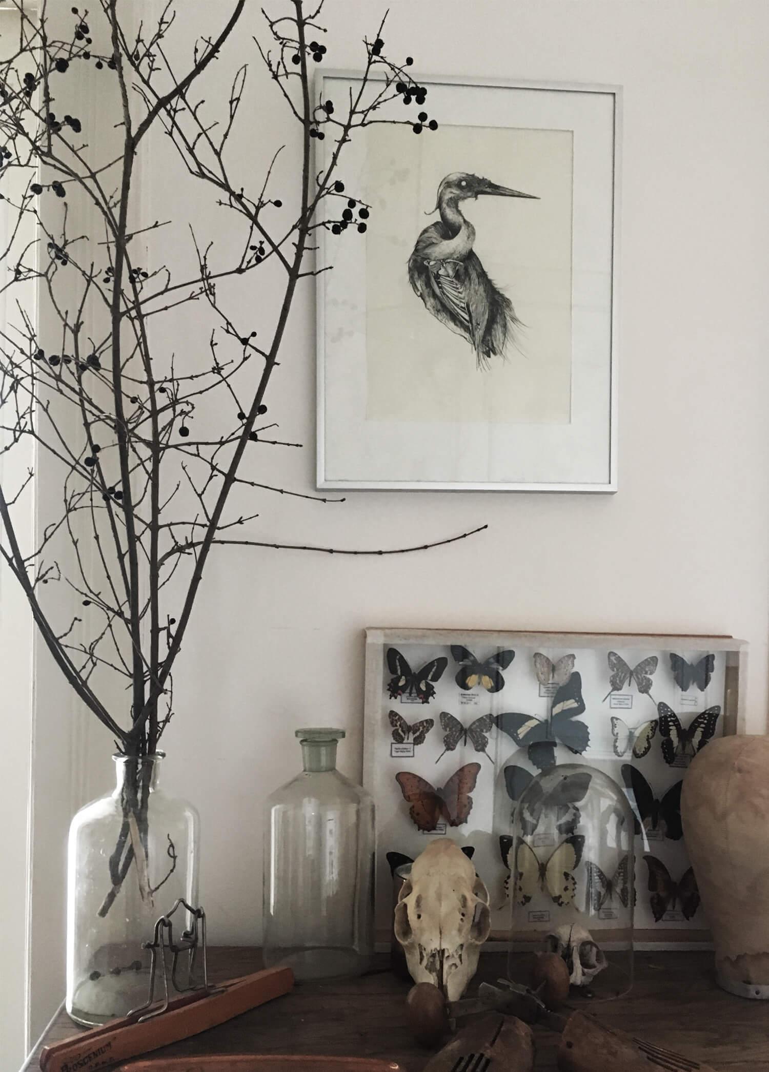 olga_mulica_bird_skull_interior
