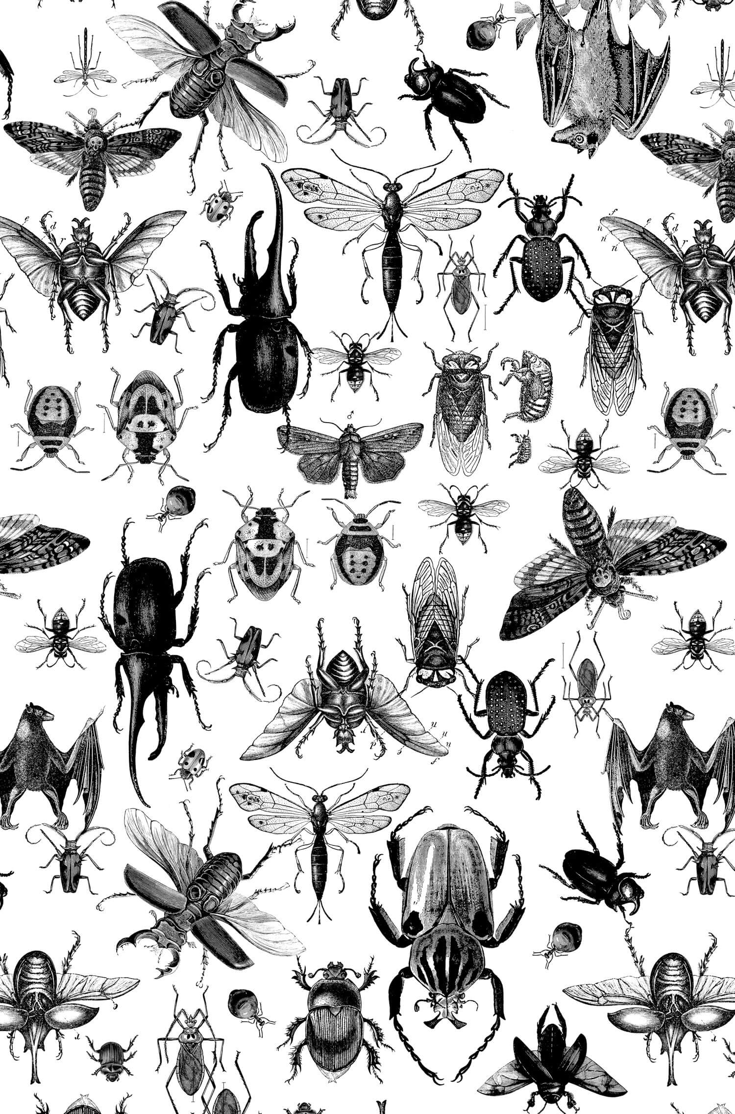 olga_mulica_insect_pattern_01