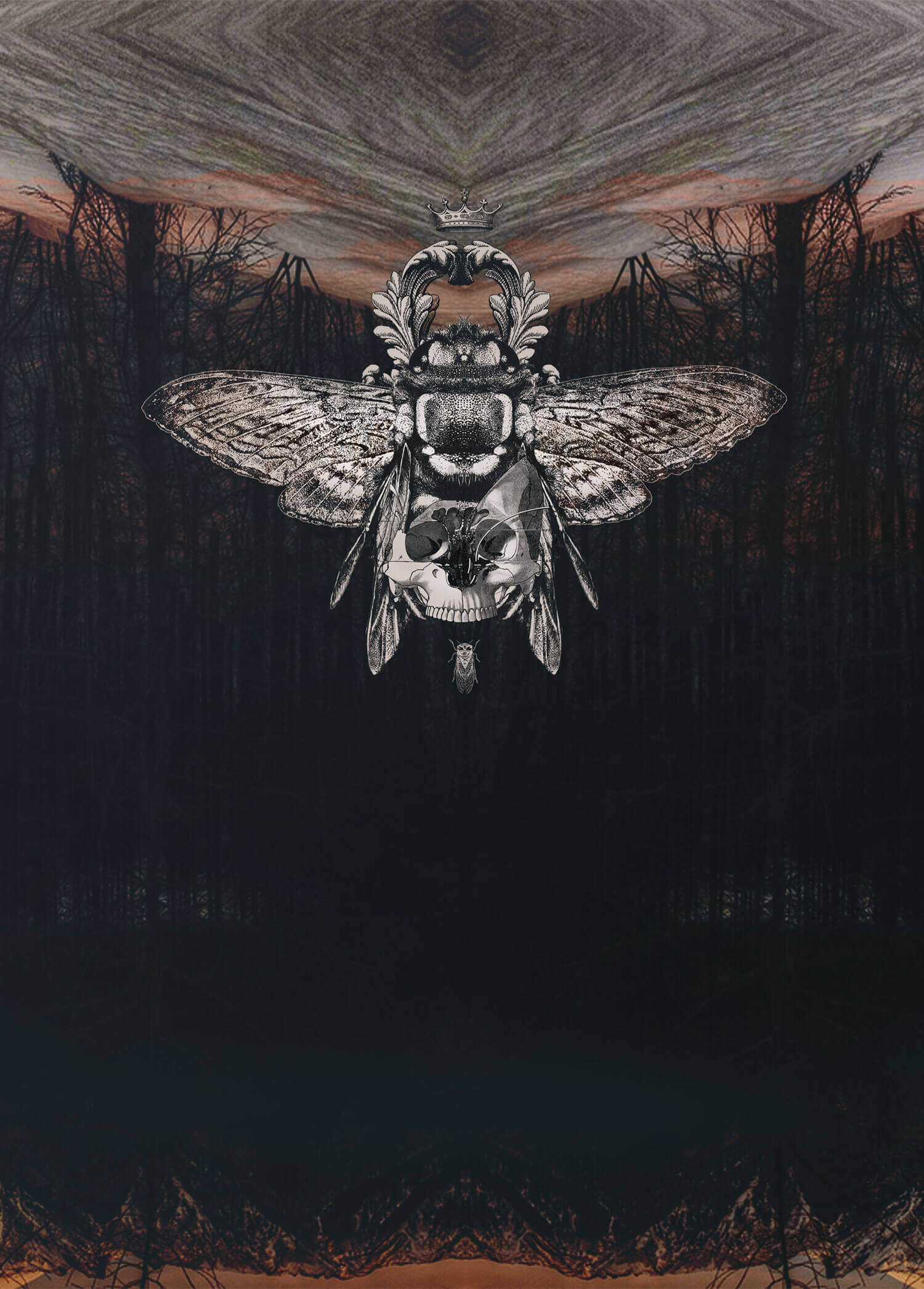 olga_mulica_forest_moth_1-1