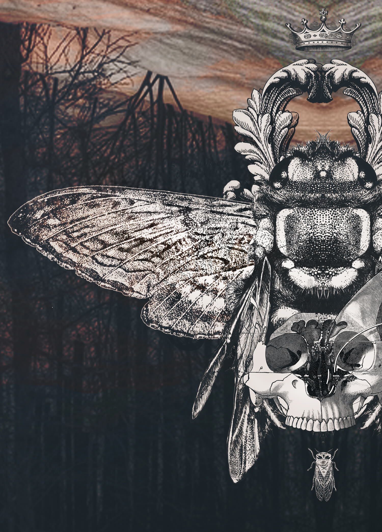 olga_mulica_forest_moth_2