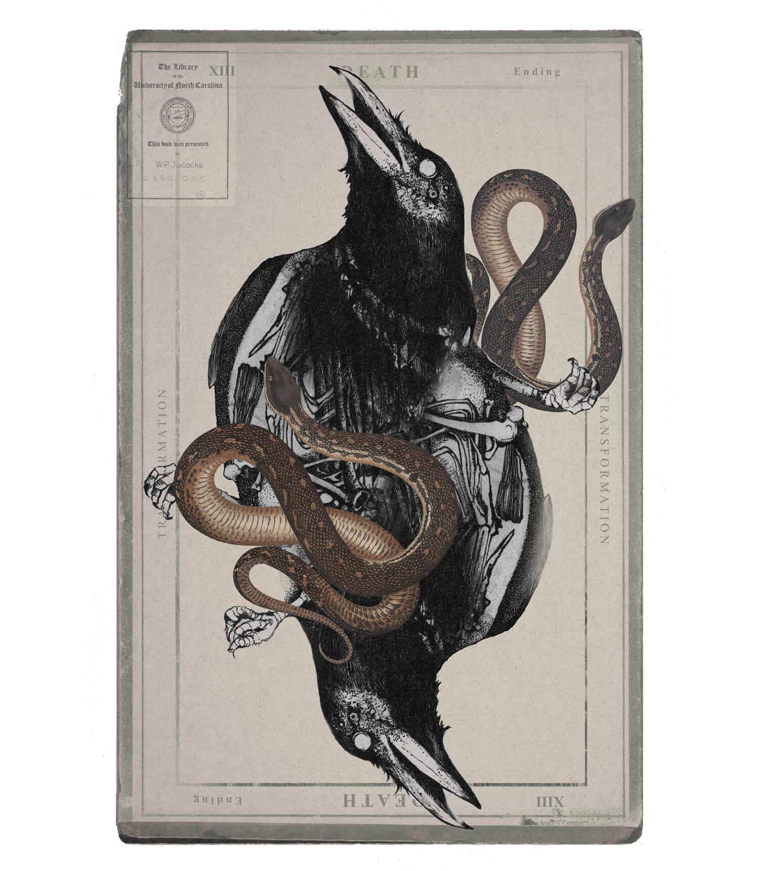 olga_mulica_black_bird__hose_02